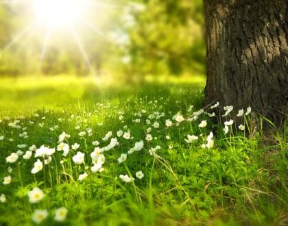 Kogo nie cieszy nadchodząca wiosna?