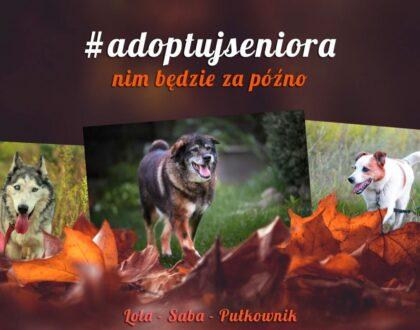 Nowa akcja wolontariuszy Schroniska #adoptujseniora nim będzie za późno!