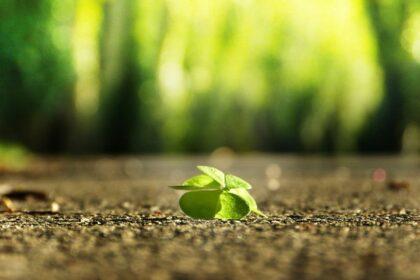 Spełnienie jest życiem w zgodzie ze sobą